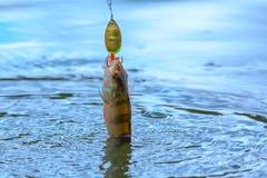 Visserijconcept toppositie met een uitrusting in het water royalty-vrije stock foto's