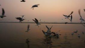 Vissersboot op het overzees bij zonsondergang De vogelszeemeeuwen vliegen op het overzees stock footage