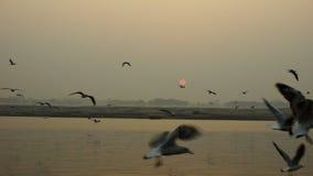 Vissersboot op het overzees bij zonsondergang De vogelszeemeeuwen vliegen op het overzees stock videobeelden