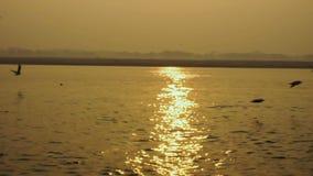 Vissersboot op het overzees bij zonsondergang De vogelszeemeeuwen vliegen op het overzees stock video