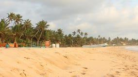 Vissersboten met Palmen stock video
