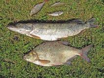 Vissersvangst Stock Afbeeldingen