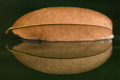 Visset blad på naturspegeln Arkivbilder