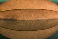 Visset blad på naturspegeln royaltyfria foton