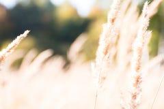Visset gräs på kanten av skogen arkivfoton