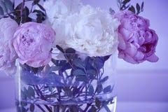 Vissna blommor i en vas Rosa vit färg Lilasignal royaltyfri bild