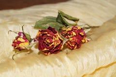 Vissna rosor på gult silke Fotografering för Bildbyråer