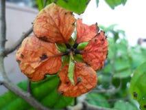 vissnad blomma Fotografering för Bildbyråer