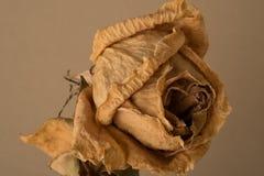vissnad blomma Arkivfoto