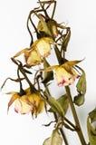 vissnade blommor Arkivbilder