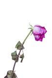 Vissnade blommor Arkivbild