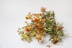 vissnade blommor Arkivfoton