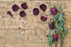 Vissnade härliga rosor på en lantlig tabell Royaltyfria Foton