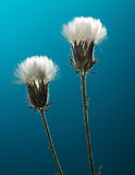 Vissnade lösa blommor Arkivfoton