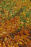 Vissnade lövverk- och gräsplansidor Royaltyfria Foton