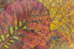 vissnade leaves Royaltyfria Bilder