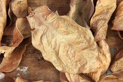 vissnade leaves arkivfoton