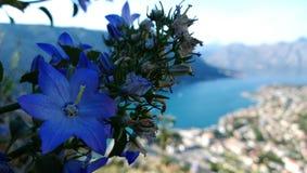 Vissnande blommaklocka på bergssidan och en sikt av fjärden av Kotor i Montenegro Höst i Balkansna Royaltyfri Bild