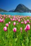 Vista às tulipas, à cidade de Lugano, ao Monte San Salvadore e ao lago lugano Fotos de Stock Royalty Free