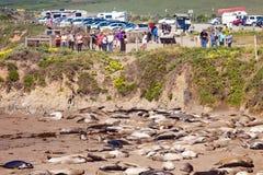 Vista σφραγίδων ελεφάντων ασβέστιο ΗΠΑ Καλιφόρνιας σημείου στοκ φωτογραφία με δικαίωμα ελεύθερης χρήσης
