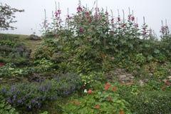Vista 'da cama do jardim da casa de campo 'no jardim do luang do Fahrenheit dos mae fotografia de stock