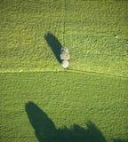 Vista aérea: Árvore isolada em um campo Foto de Stock