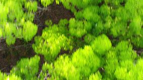 Vista aérea acima da floresta luxúria com voo de alta velocidade para a frente vídeos de arquivo