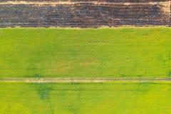 Vista aérea, campos do arroz e fileiras do solo antes da planta imagem de stock
