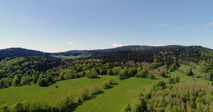 Vista aérea da floresta video estoque