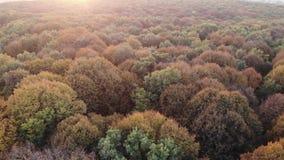 Vista aérea da floresta colorida do outono, madeiras de carvalho, por do sol filme