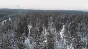 Vista aérea da floresta do inverno video estoque