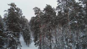 Vista aérea da floresta do inverno filme