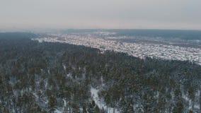 Vista aérea da floresta do inverno vídeos de arquivo
