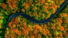 Vista aérea da floresta grossa no outono com corte de estrada completamente Imagem de Stock