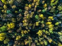 Vista aérea da floresta latifoliada ártica da parte superior no outono com sol e raios Fotos de Stock Royalty Free