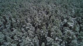 Vista aérea da floresta nevado do inverno vídeos de arquivo