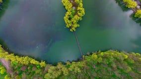 Vista aérea da ilha cercada por salgueiros bonitos e pela floresta colorida vídeos de arquivo