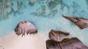 Vista aérea da praia bonita da ilha com os povos que inclinam-se em t fotos de stock