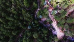 Vista aérea das árvores vídeos de arquivo