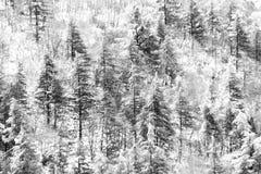 Vista aérea das árvores cobertas pela neve em uma floresta, no lado da montanha Úmbria de Subasio, criando um tipo do sumário foto de stock royalty free