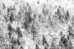 Vista aérea das árvores cobertas pela neve em uma floresta, no lado da montanha Úmbria de Subasio, criando um tipo do sumário fotografia de stock