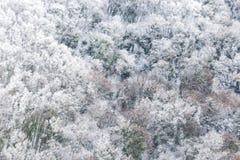 Vista aérea das árvores cobertas pela neve em uma floresta, no lado da montanha Úmbria de Subasio, criando um tipo do sumário imagens de stock