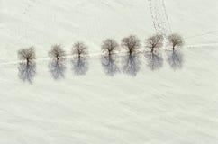 Vista aérea das árvores e das sombras na neve Foto de Stock