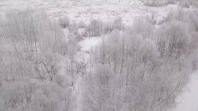 Vista aérea das árvores na neve no inverno vídeos de arquivo