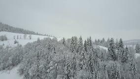 Vista aérea das montanhas do inverno cobertas com os pinheiros Baixo voo sobre a beleza spruce nevado da floresta dos animais sel video estoque