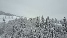 Vista aérea das montanhas do inverno cobertas com os pinheiros Baixo voo sobre a beleza spruce nevado da floresta dos animais sel vídeos de arquivo