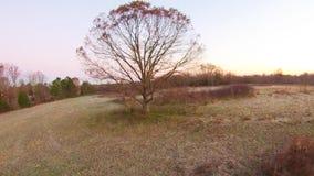 Vista aérea das paisagens e das árvores filme