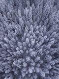 Vista aérea de árboles nevados en el desierto imágenes de archivo libres de regalías