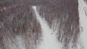Vista aérea de árboles de pino nevosos y de una pequeña corriente de serpenteo clip Vista aérea del bosque del invierno cubierta  metrajes