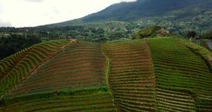 Vista aérea de campos colgantes tropicales almacen de video